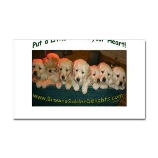 Browns Golden Delights  Golden Retriever Dog Breeder puppy photo on